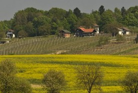 cyclingslovenia_wine and wellness tour_rapeeseed-field